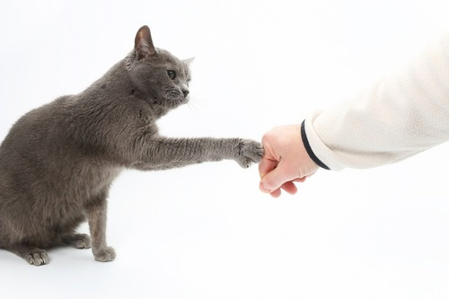 グーパンする猫