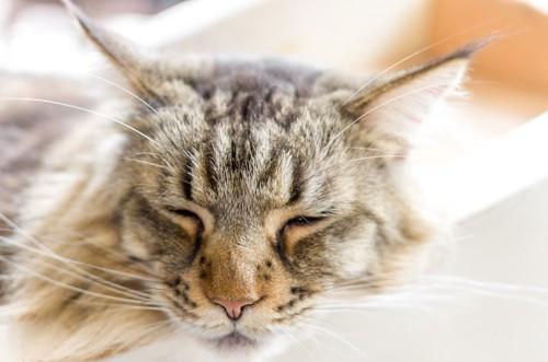 眠っている猫の顔アップ