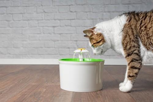給水器を見つめる猫
