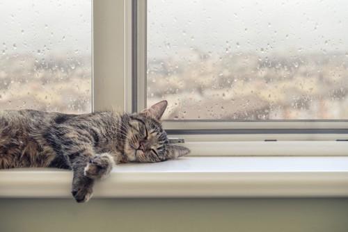 雨のに窓際で寝る猫