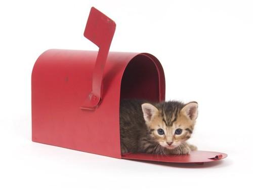 郵便受けに入った猫