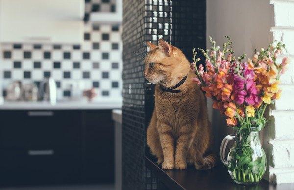 仕切りのないキッチンにある花瓶と猫