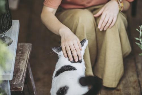 足元によってきた猫