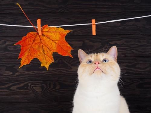 干されている落ち葉と見上げる猫