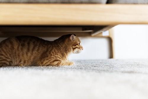 隠れている様子の猫