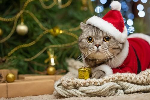 サンタの服を着たタビー猫とツリー