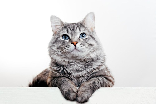 お澄ましな猫