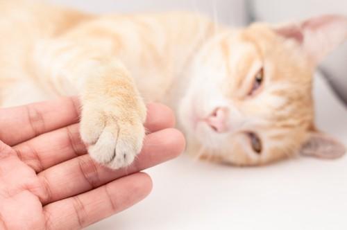 寝ている猫の手を触る人
