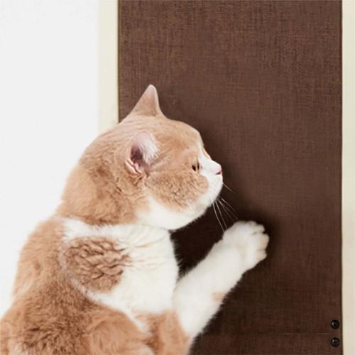 スクラッチパネルで爪とぎする猫