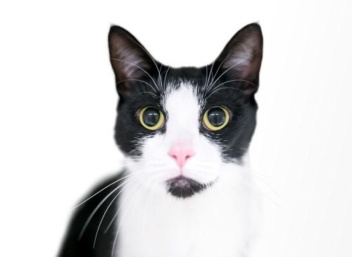 アゴヒゲのある猫