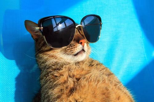 サングラスをかけている猫