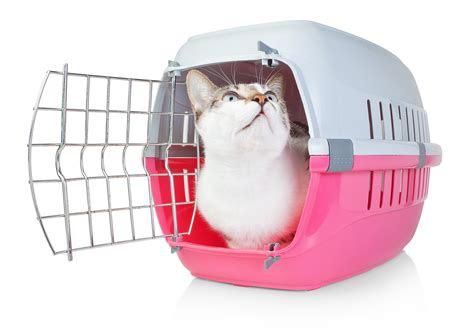 ケージの中に入っている猫