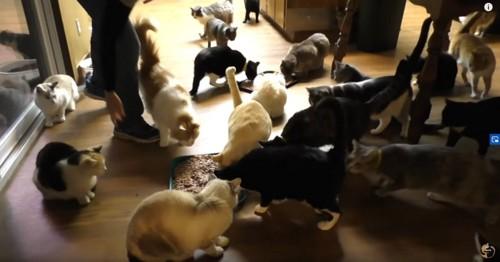 食事中の複数の猫