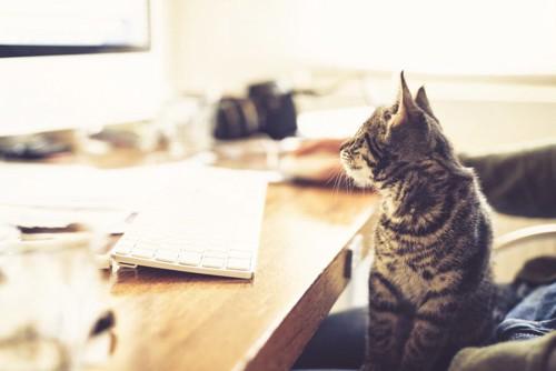 リビングに居る猫