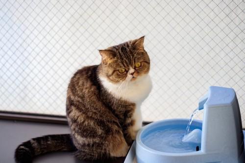 給水器と猫