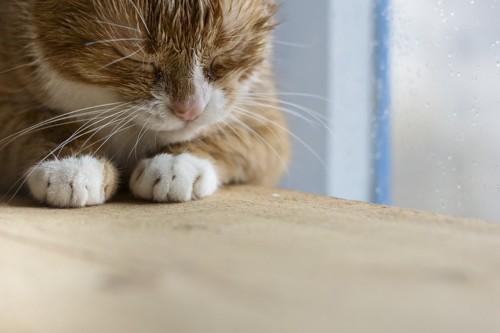 下を向く猫