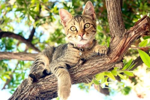 木の上の首輪をした猫