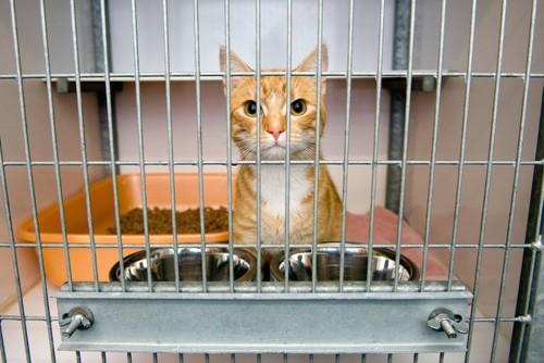ケージに入ってこちらをみつめる猫