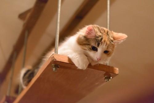 高いところから下を見る猫