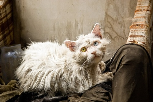 汚れている猫
