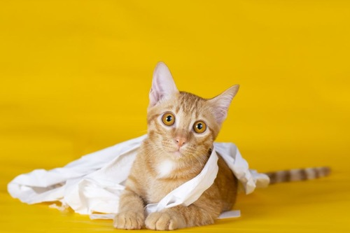 ティッシュに巻きつく猫