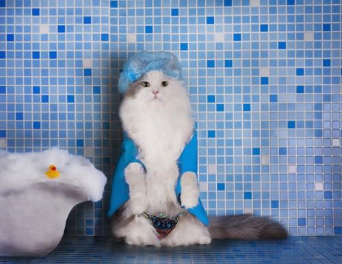 お風呂場でシャワーキャップを被る猫