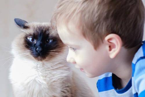 シャム猫と小さな男の子
