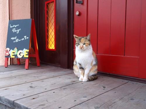 玄関の扉の前に座る猫