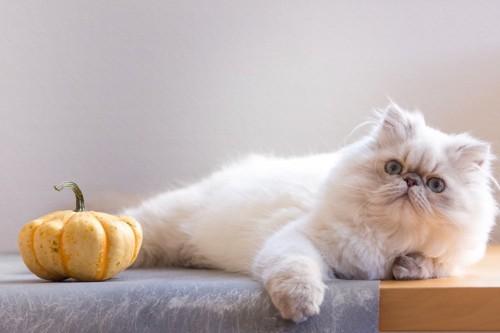 横たわる猫とカボチャ