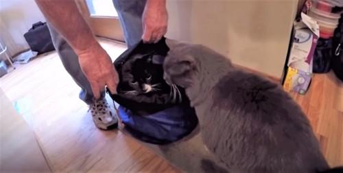 ジューンと兄弟猫