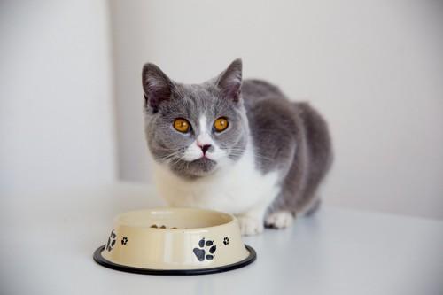 肉球柄の皿と猫