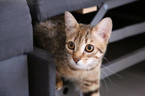 隙間から出る猫