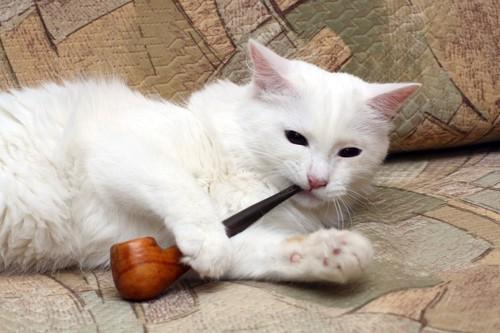 パイプをくわえる猫