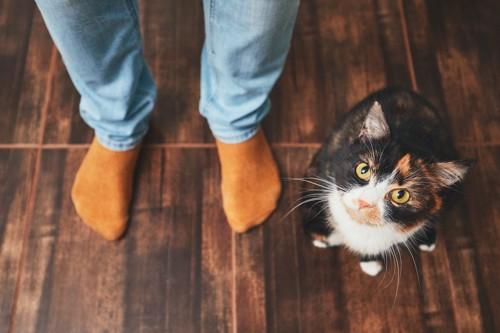 人の足元にいる三毛猫