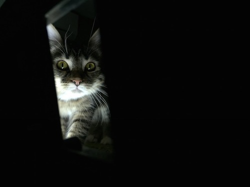 暗闇でこちらを覗き込む猫