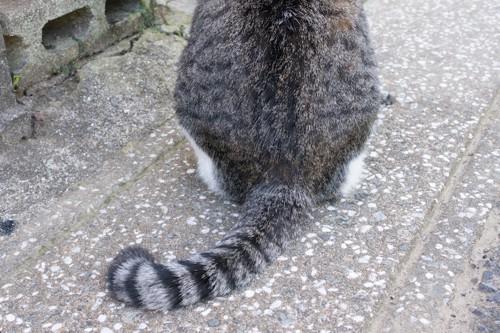 後ろ姿の猫のしっぽ
