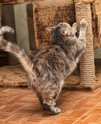 配置される爪とぎで研ぐ猫