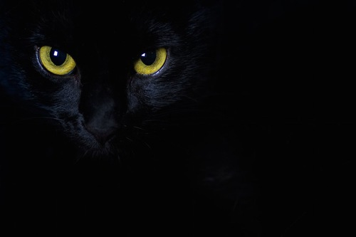 暗闇に光る猫の目