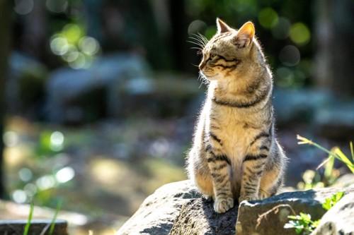 岩に座る猫