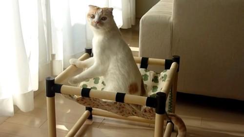 ハンモックの上で振り返ってカメラを見る猫
