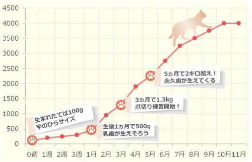 子猫の体重推移グラフ