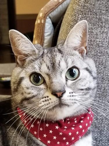 猫のおでこ
