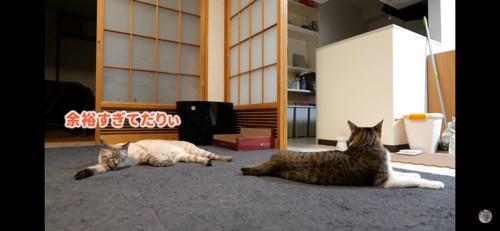 壁猫チャレンジ