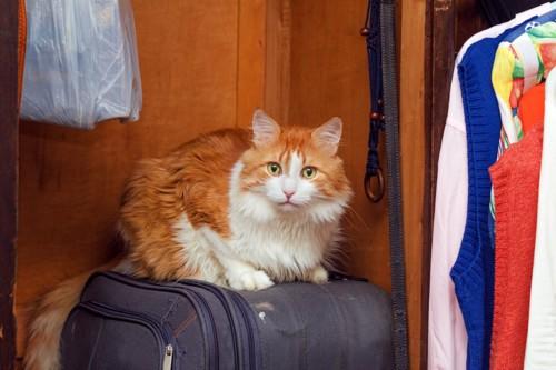 押し入れの中にいる猫
