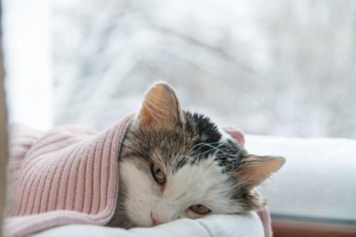 元気の無い寝る猫