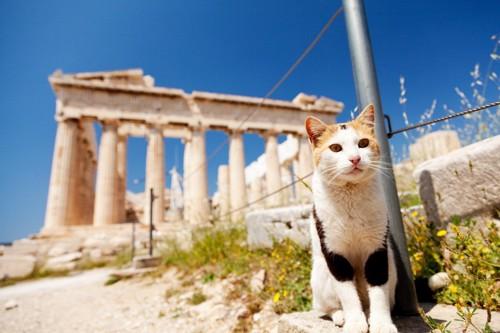 パルテノン神殿と猫