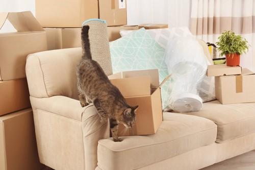 引っ越しと猫