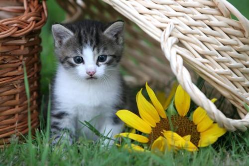 集中している猫