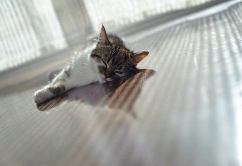床で寝る猫
