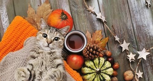 秋の公園を散歩する猫